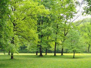 Piękniejszy park za sprawą Budżetu Obywatelskiego